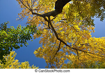 Autumn maple branch with yellow leaves against the blue clear sky.