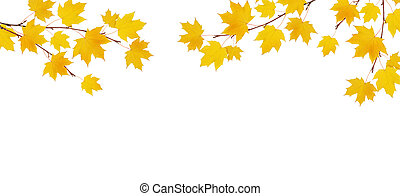 Autumn maple branches with yellow leaves isolated on whitel background. Flat lay. Top view.