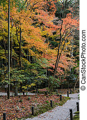 Autumn maple foliage garden at Enkoji Temple in Kyoto, Japan