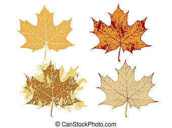 maple grunge leaves - Autumn maple grunge leaves-vector ...