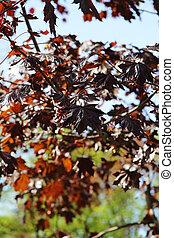 autumn maple in the park