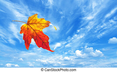 Autumn Maple Leaf - Autumn maple leaf flying away against...