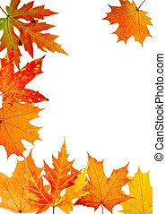 autumn maple-leaf, frame for a postal on a white background