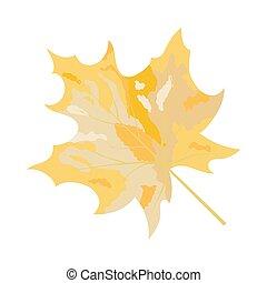Autumn Maple Leaf