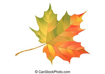 Autumn maple leaf isolated on white background. Vector...