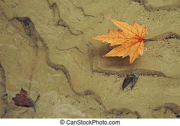 autumn maple leaf on water