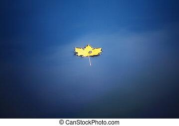 maple leaf on water