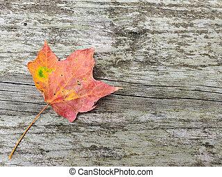 autumn maple leaf on wood