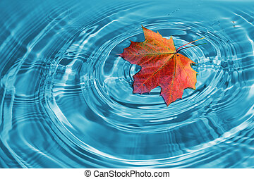 autumn maple leaf which lying on water