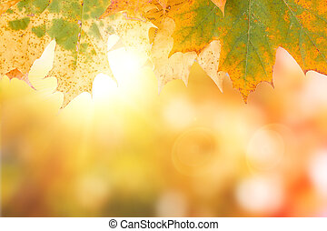 autumn maple leave background with boked