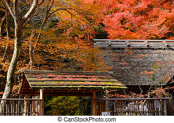 autumn maple leaves are on the japan style roof