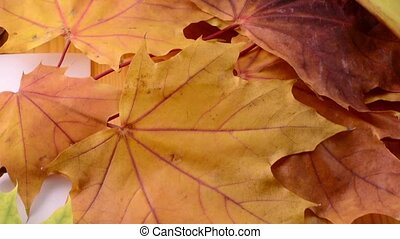 Autumn Maple leaves background. Close up. HD Shot With Motorized Slider.