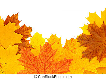 Autumn maple leaves - Decorative frame from bright autumn...