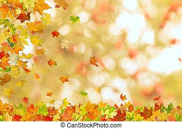 Autumn maple leaves falling
