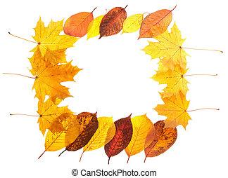 Autumn maple leaves falling frame