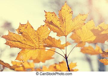 Autumn maple leaves in retro style