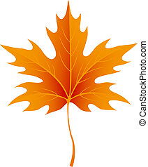 Autumn maple leaves isolated on white. Vector