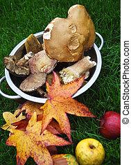 Autumn maple leaves, mushrooms and apples