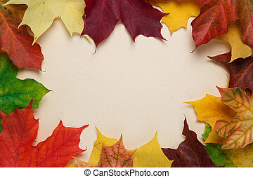 autumn maple leaves on paper surface