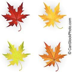 Autumn Maple Leaves Set.