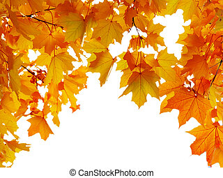 Autumn maple leaves shaped arch, isolated on white background