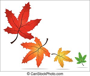 Autumn maple leaves. Vector illustration