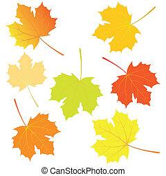 Autumn maple leaves. Vector illustration