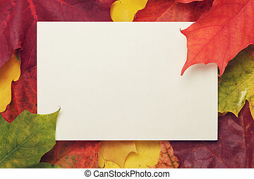 autumn maple leaves with paper card