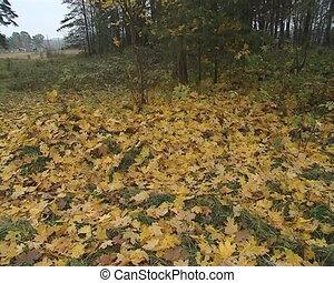 autumn maple rural house