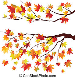 Autumn maple tree branches on white background
