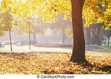 autumn maple tree in sunny fall morning