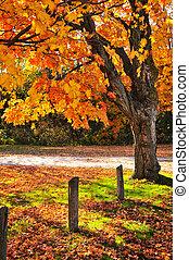 Autumn maple tree near road