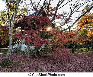 Autumn maple trees garden