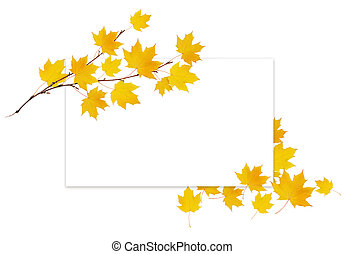 Autumn maple twig with yellow leaves and a white card on white background