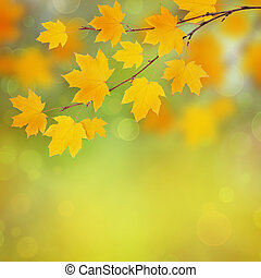 Autumn maple twig with yellow leaves on blurred background