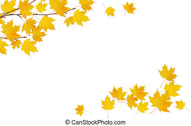 Autumn maple twig with yellow leaves in a corner arrangements isolated on white background