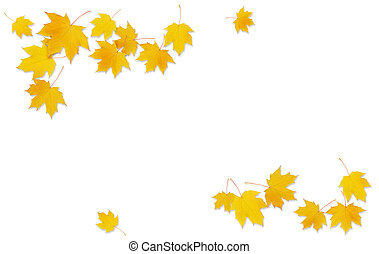 Autumn maple twig with yellow leaves on white background. Flat lay. Top view.
