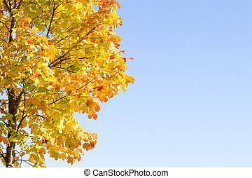 Autumn maple with the sky background