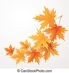 Autumn maples falling leaves background.