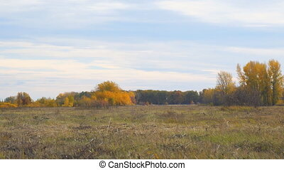 View of the autumn forest from a distance - Autumn meadow in...