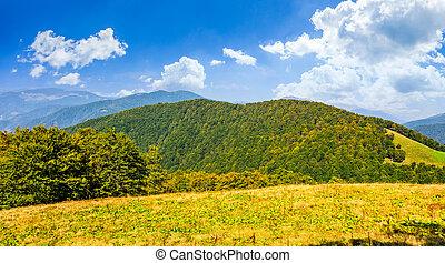 autumn meadow on hillside of mountain range - early autumn...