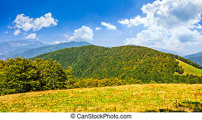 autumn meadow on hillside of mountain range - early autumn...
