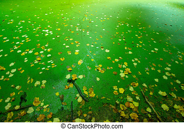 Autumn melancholic colorful background with copy text space. Yellow leaves on the surface of a lake in the woods covered by green algae.