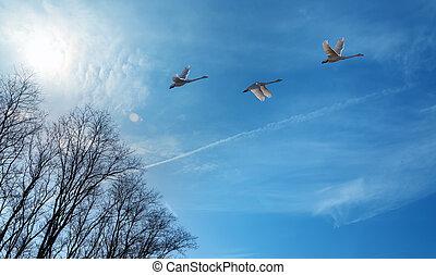 Autumn migration of cranes