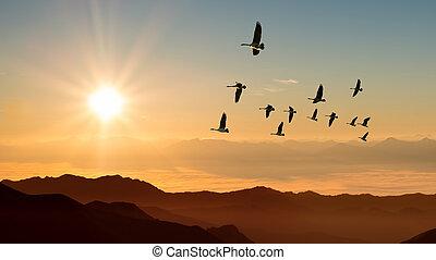 Autumn migration of cranes panoramic view - Birds at sunrise...