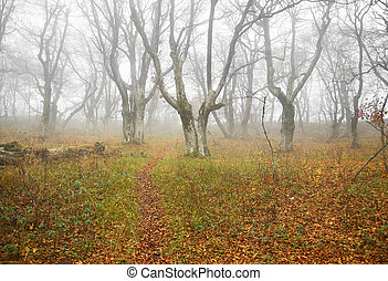 Autumn misty forest with fallen leaves.