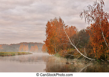 Autumn misty morning on the river. Yellow birch trees