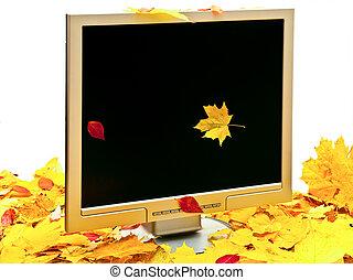 autumn monitor