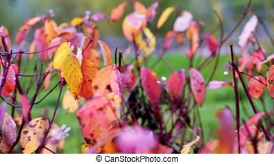 Autumn mood background from colorful leaves. Autumn leaves ...