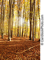 autumn morning forest with leaves